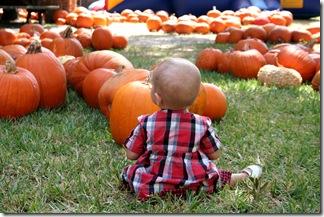 Pumpkin Patch 053 photoshop