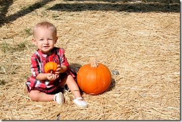 Pumpkin Patch 156 photoshop