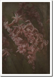 pinkflower3