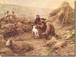 francisco_ovelhas