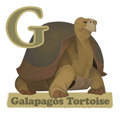 Galapagos Tortoise Page Final