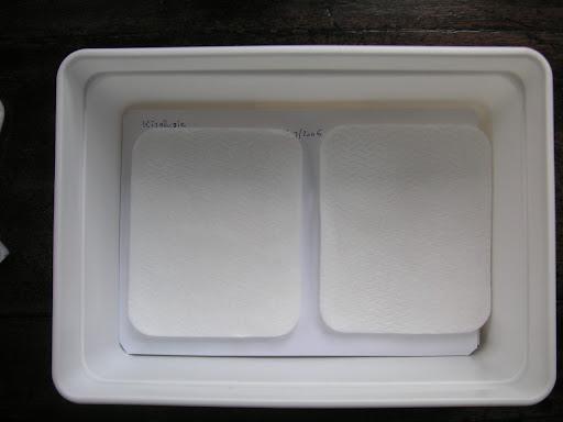 8. Les chasses sont séparées entre elles par des compresses larges Monoprix à bords arrondis 11 cm x 9 cm (épaisseur 0,5 cm)