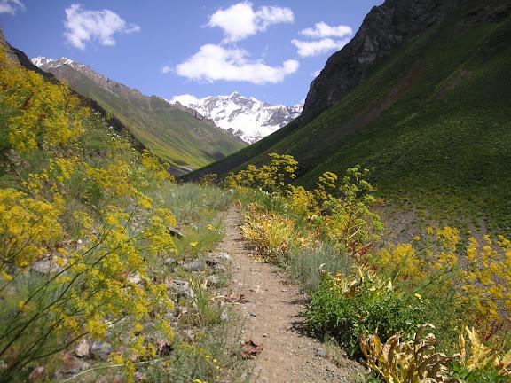 Biotope de melitaea sibina ALPHÉRAKY, 1881. Versant nord de la chaîne de Vanj, 2900 m, 20 juillet 2009. Photo : J.-F. Charmeux
