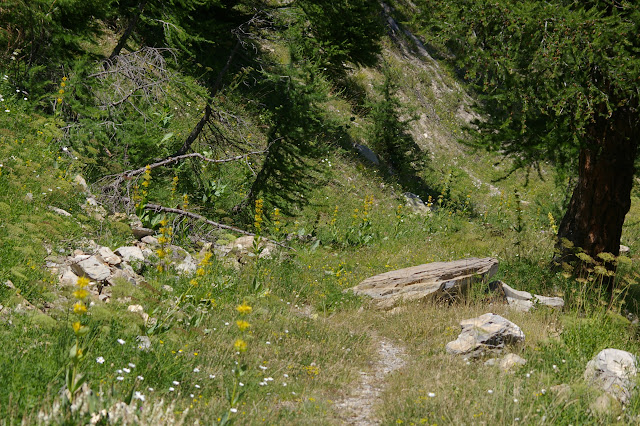 Vallon Claous (2100 m) : biotope de Parnassius apollo. 7 août 2009. Photo : J.-M. Gayman