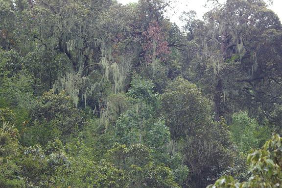 La forêt à 3000 m. Ouest de Shaxi, 10 août 2010. Photo : J.-M. Gayman