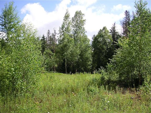 10 km au nord de Krasnorechenskij près de Dal'negorsk, 25 juillet 2010. Photo : J. Michel