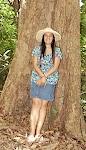 over 100 years mango tree Hawaii.JPG