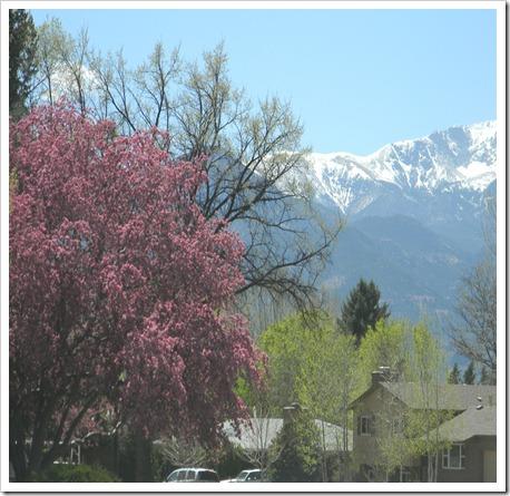 spring2010 005