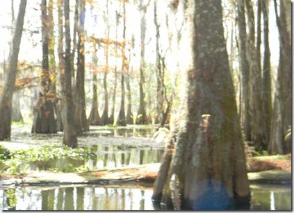 swamp tour 100