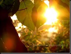 Gorgeous Sunrise!! 024