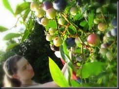 Blueberries 2010 013