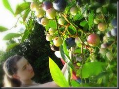 Blueberries 2010 013