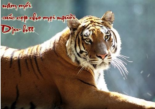 http://lh4.ggpht.com/_6nktQOihaMo/S21CNyCH5BI/AAAAAAAAJWI/LqJOwBMH4HE/477b35ca_tiger_11_resize.jpg