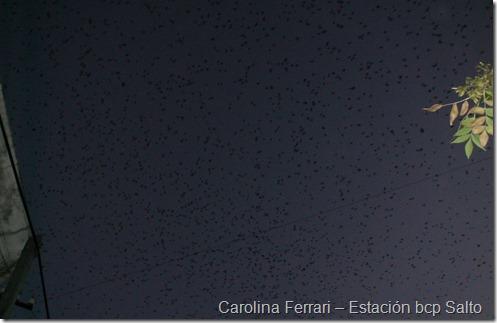 Carolina Ferrari – Estación bcp Salto