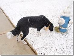 Snow 030