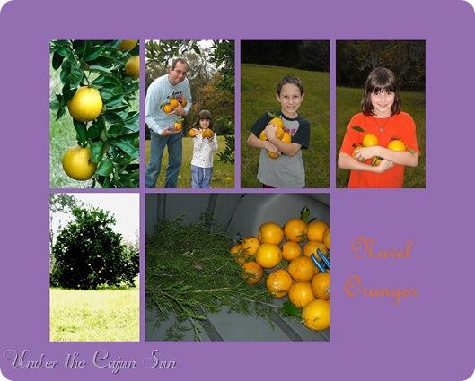 Navel Oranges jpg-004