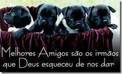 cachorros_fofos
