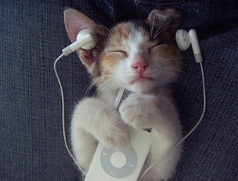 The-Cat-Enjoy-The-iPod