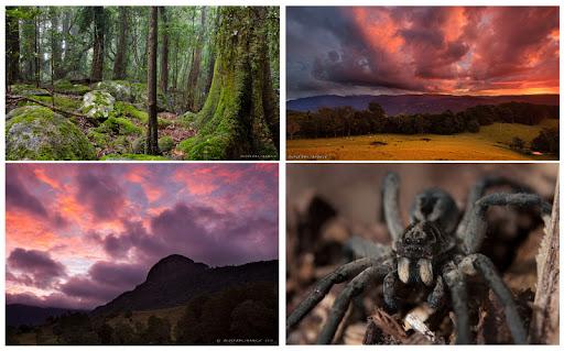 IMAGE: http://lh4.ggpht.com/_6vdPqp2Fxq4/TGOqj-E5zBI/AAAAAAAAB8g/0TgNuWWfEmM/spiderpainting_photosused_gcflora.jpg