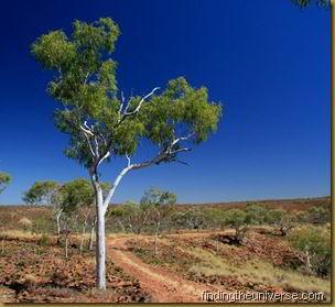 NT Tree