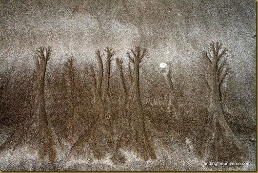 More mystical sand trees
