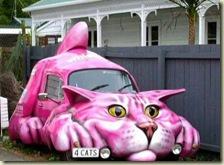 voit cat