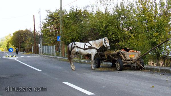 Cal în mijlocul străzii