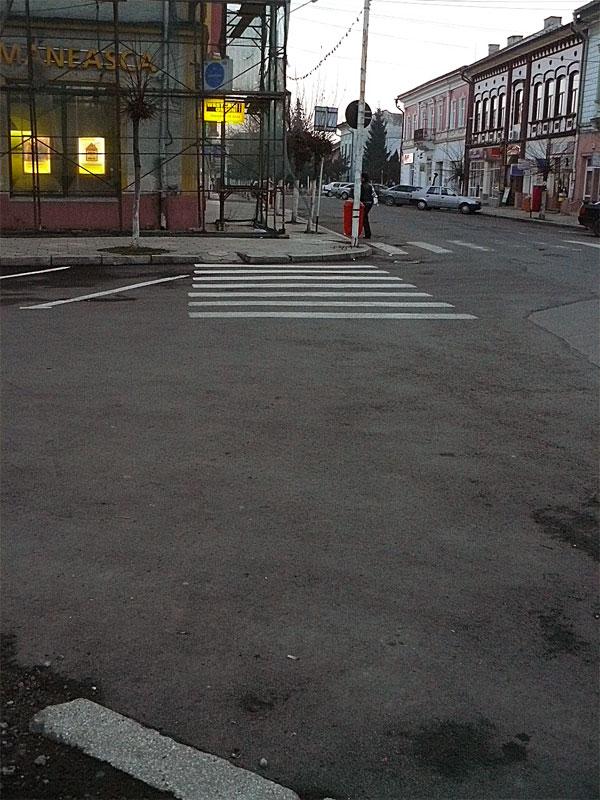 Zebra în Rădăuţi