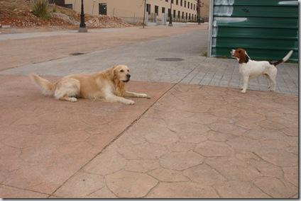 Otto y Rayo