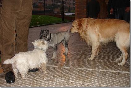Teo, Duna y Otto