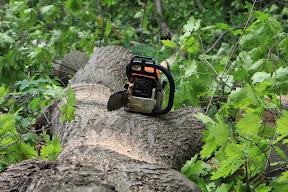 (с) Главное: Вырубка здоровых деревьев в парке Горького