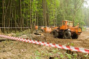 продолжают вывозить останки убитых деревьев
