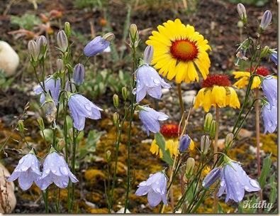 6cflowers