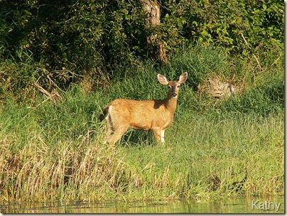 DeerHarrison14'05-3