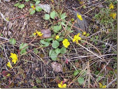 Tunkwa - Easter 2010 -2 169