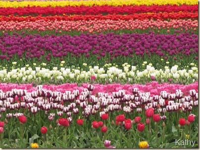 Tulip Festival 040