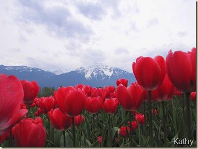 Tulip Festival 061