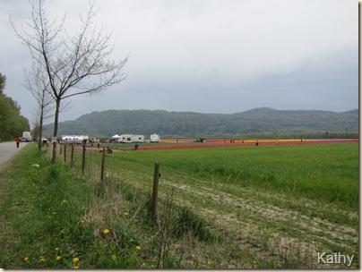 Tulip Festival 065
