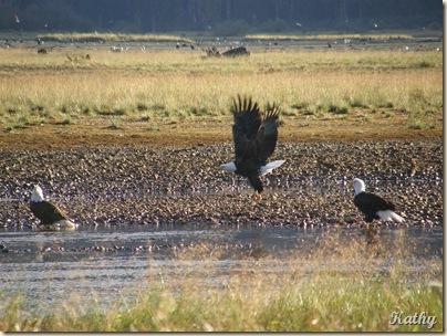 Eagles close 022