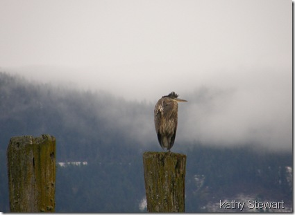 Heron on a post