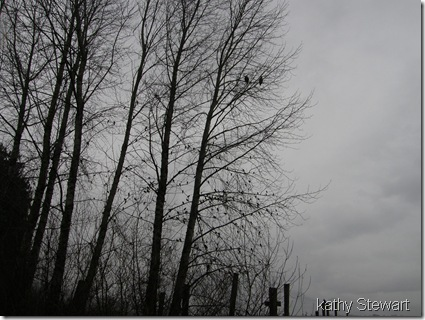 Red-Wings in the trees