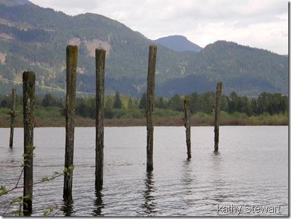 Swallow activity at pilings