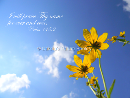 Yellow Flowers (With Scripture)