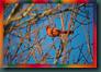 birdsky1