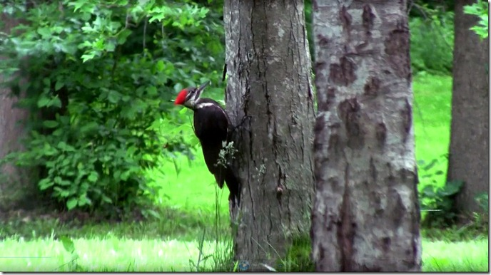 woodpecker edit