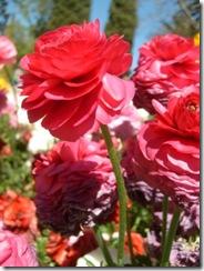 Flower Carnival 00002