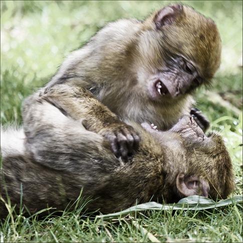 luta entre animais desbaratinando (25)