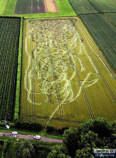 Messy Corn Field