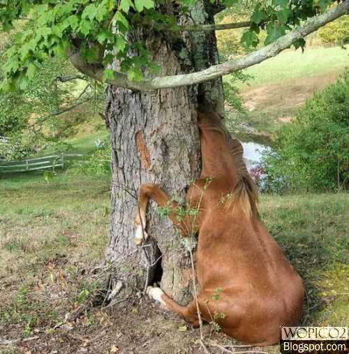 Stucked Horse