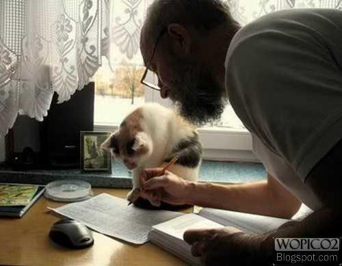 Cat Reader